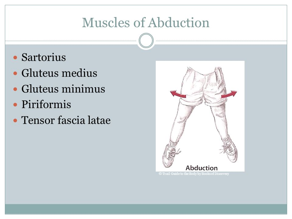 Muscles of Abduction Sartorius Gluteus medius Gluteus minimus Piriformis Tensor fascia latae © Trail Guide to the Body by Books of Discovery