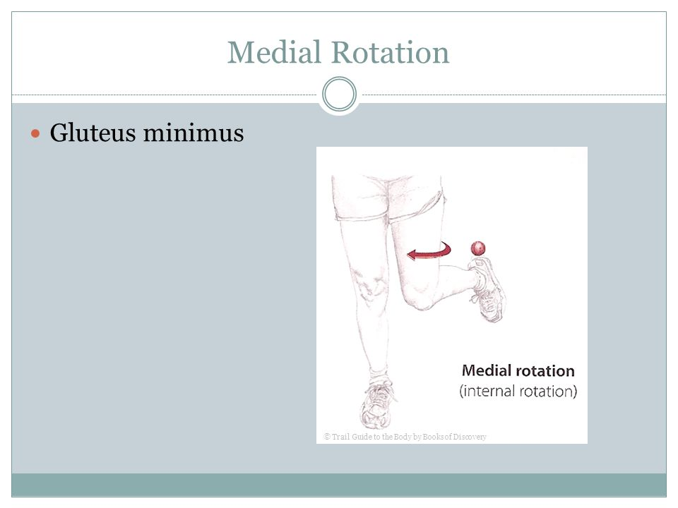 Medial Rotation Gluteus minimus © Trail Guide to the Body by Books of Discovery