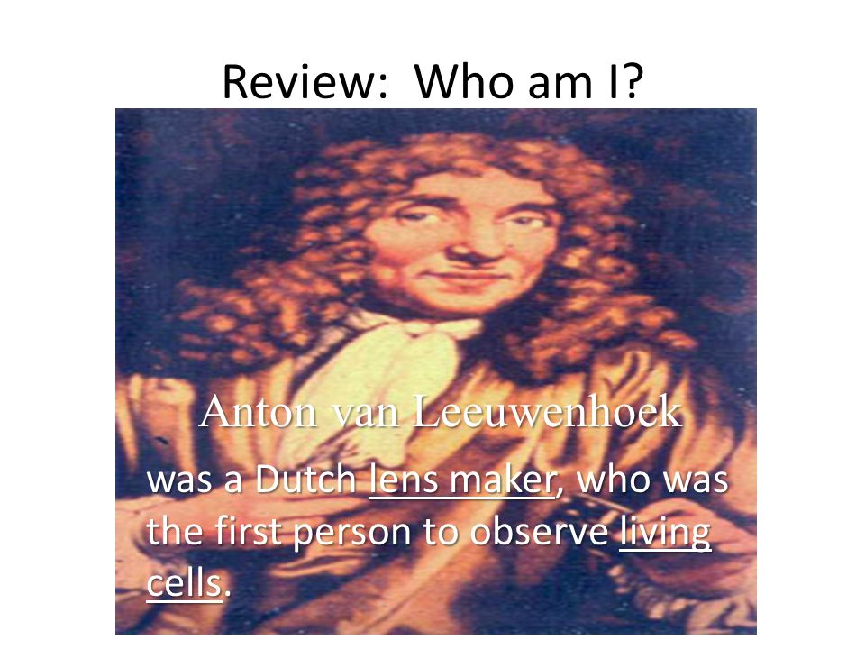 Review: Who am I? Anton van Leeuwenhoek was a Dutch lens maker, who was the first person to observe living cells.