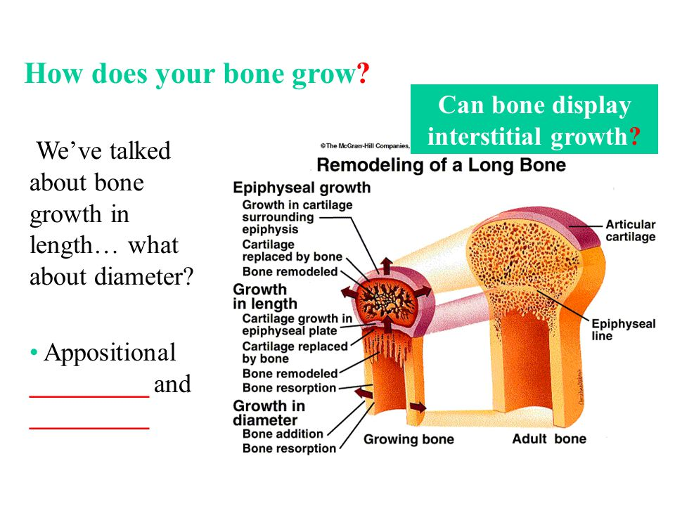 We've talked about bone growth in length… what about diameter? Can bone display interstitial growth? Appositional _________ and _________ How does you