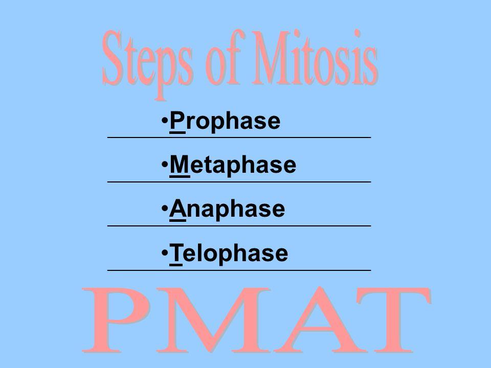 Prophase Metaphase Anaphase Telophase _______________________________________
