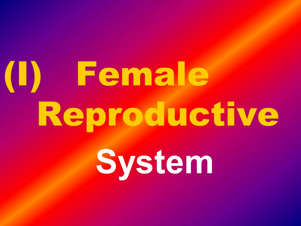 Internal Fertilization Takes place inside the body of the female Less eggs are required Ex: mammals, birds and reptiles