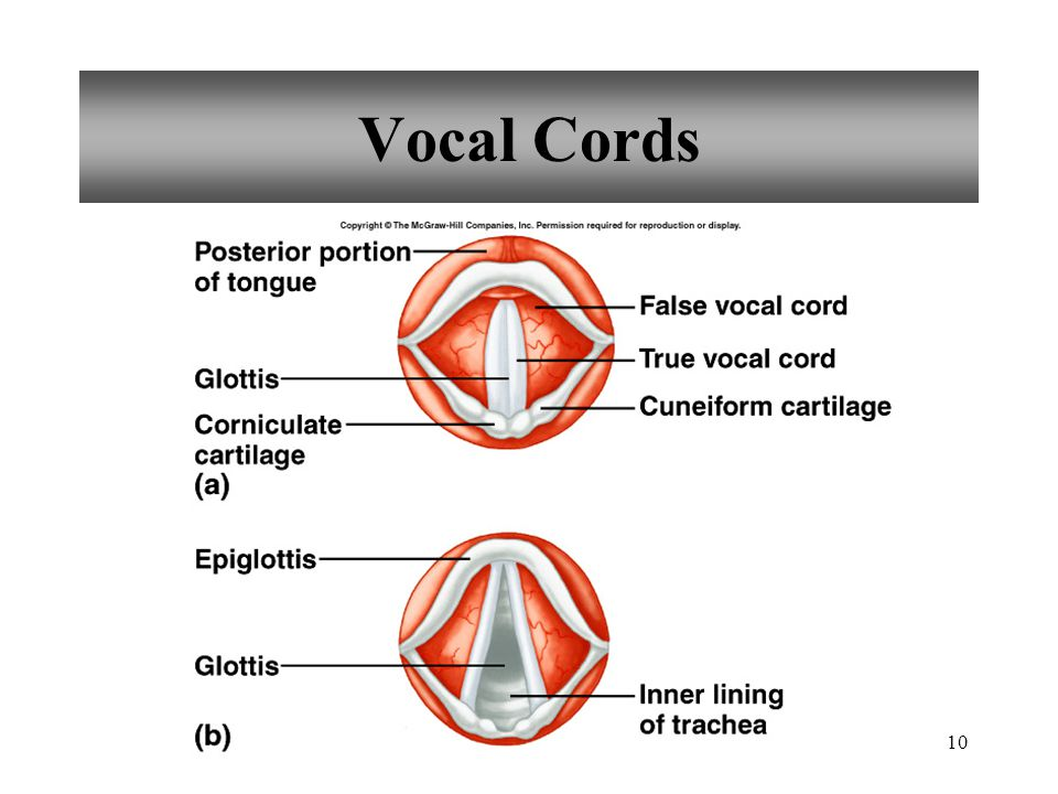 10 Vocal Cords
