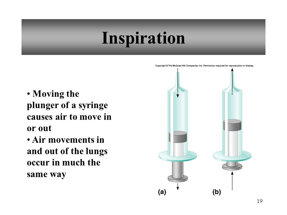 19 Inspiration Moving the plunger of a syringe causes air to move in or out Air movements in and out of the lungs occur in much the same way
