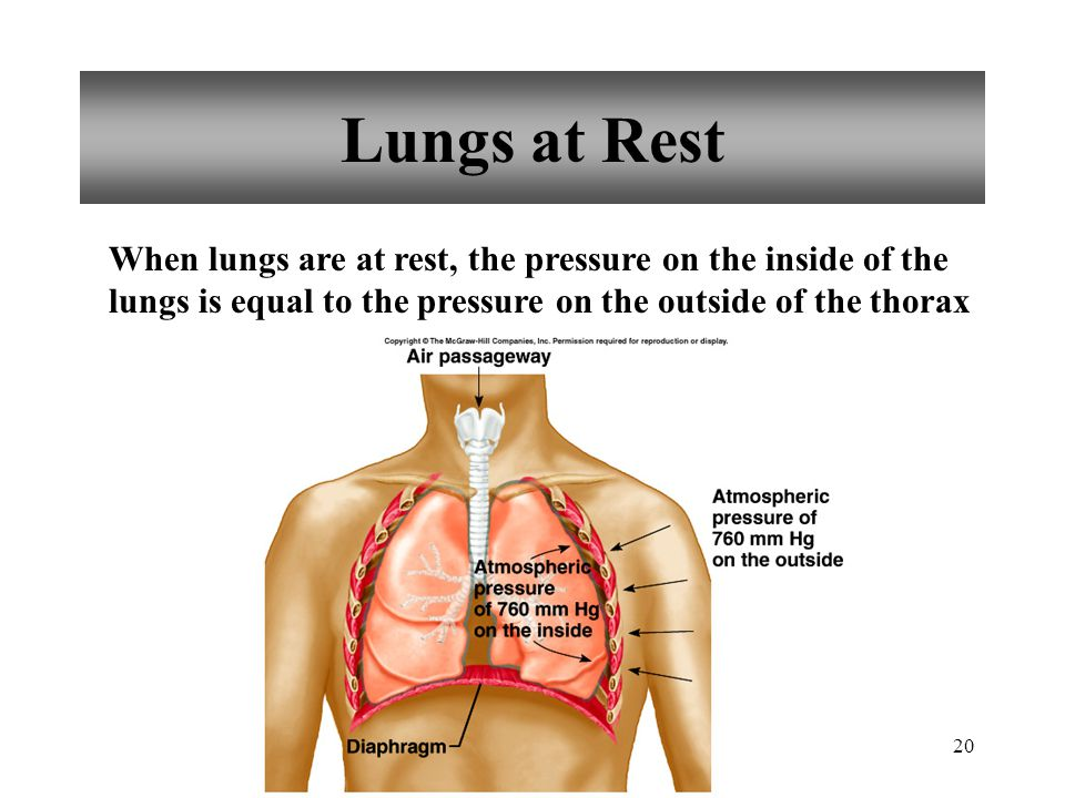 20 Lungs at Rest When lungs are at rest, the pressure on the inside of the lungs is equal to the pressure on the outside of the thorax