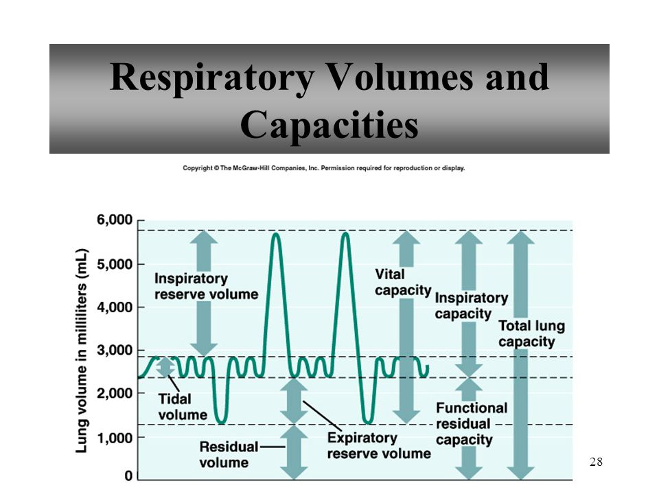 28 Respiratory Volumes and Capacities