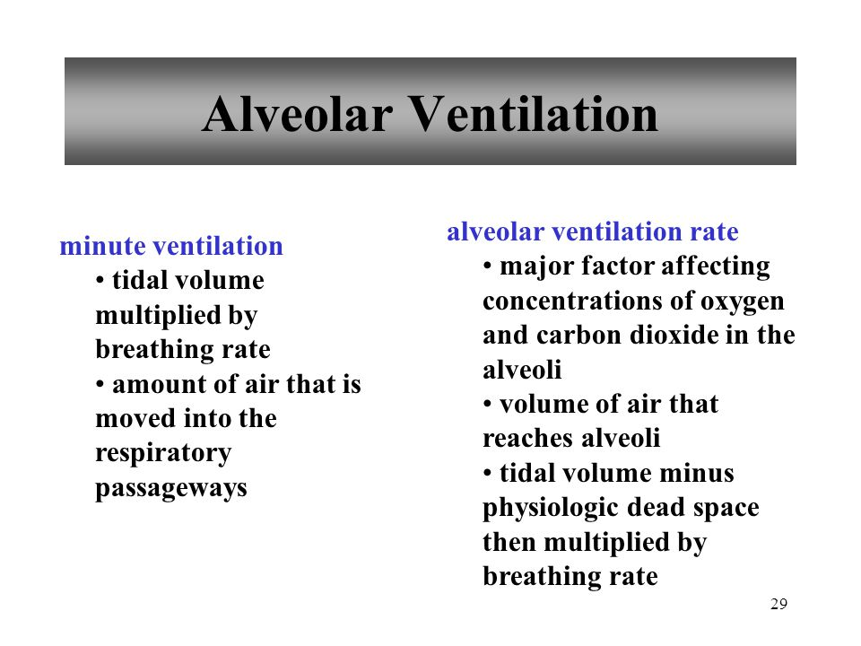 29 Alveolar Ventilation minute ventilation tidal volume multiplied by breathing rate amount of air that is moved into the respiratory passageways alveolar ventilation rate major factor affecting concentrations of oxygen and carbon dioxide in the alveoli volume of air that reaches alveoli tidal volume minus physiologic dead space then multiplied by breathing rate