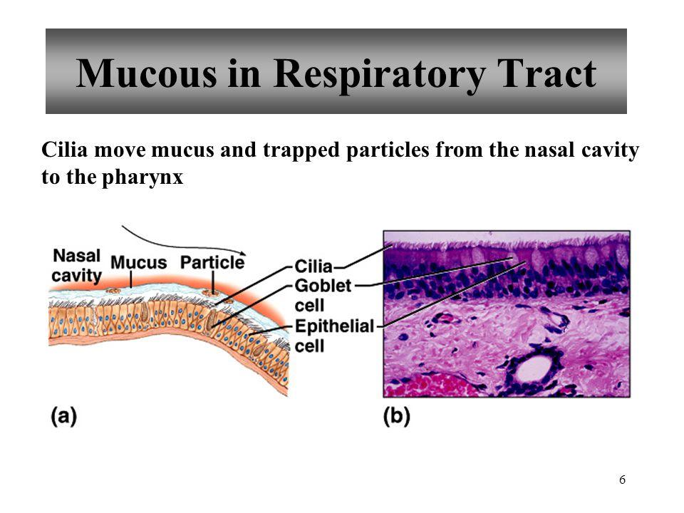 27 Respiratory Volumes and Capacities