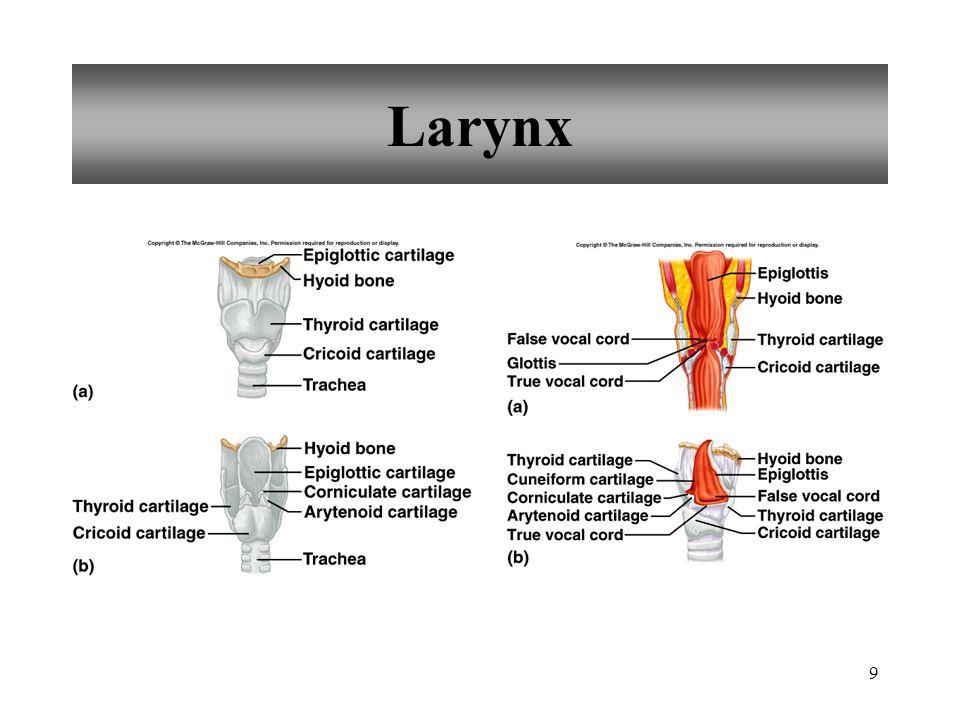 9 Larynx