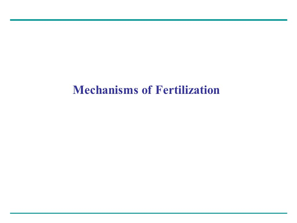 Mechanisms of Fertilization