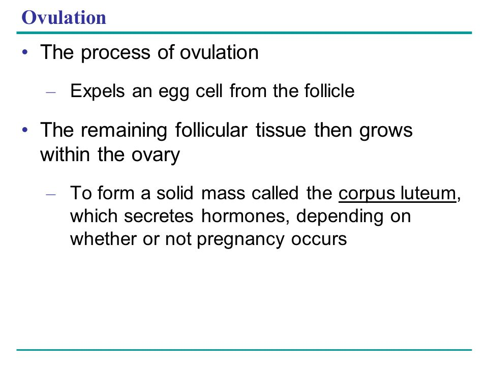 Ovulation The process of ovulation – Expels an egg cell from the follicle The remaining follicular tissue then grows within the ovary – To form a soli