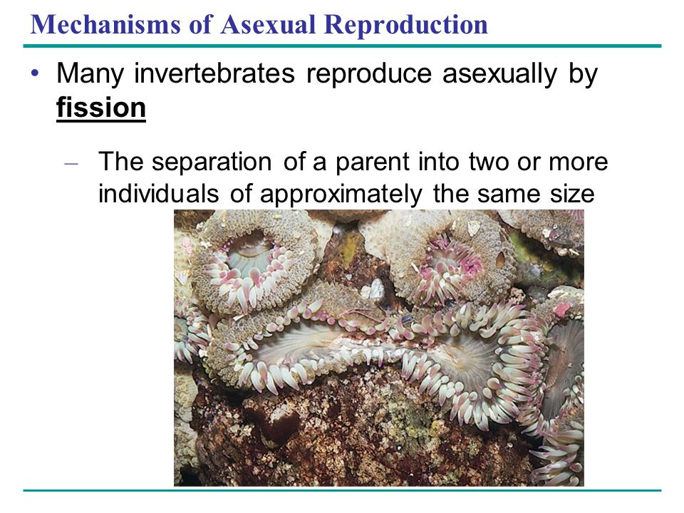 Hormonal Control of the Male Reproductive System Testosterone and other androgens are directly responsible for the primary and secondary sex characteristics of the male