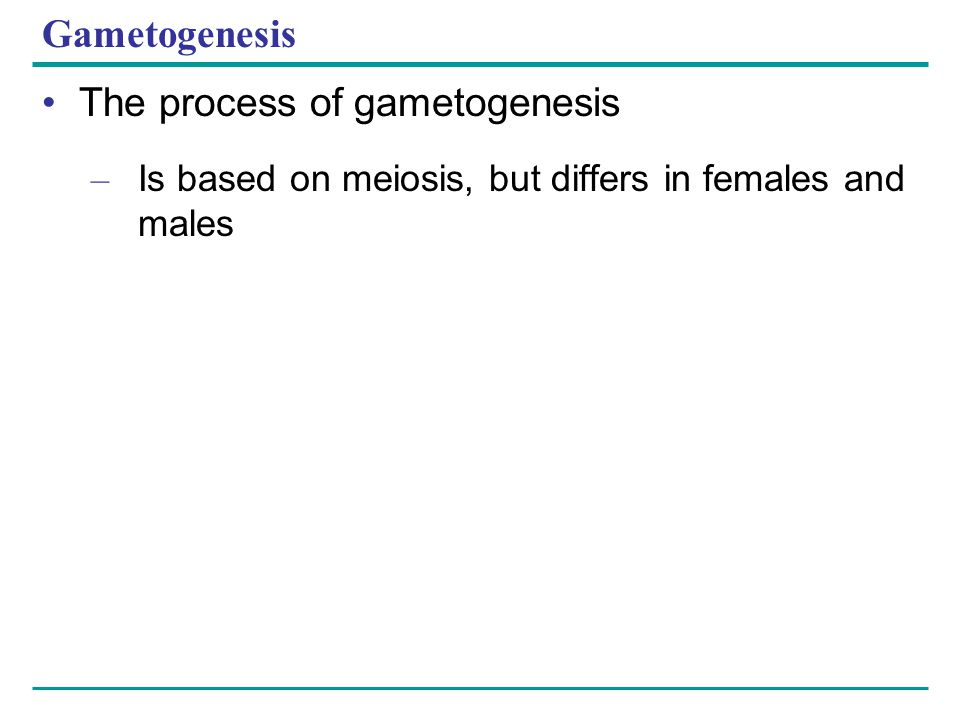 Gametogenesis The process of gametogenesis – Is based on meiosis, but differs in females and males