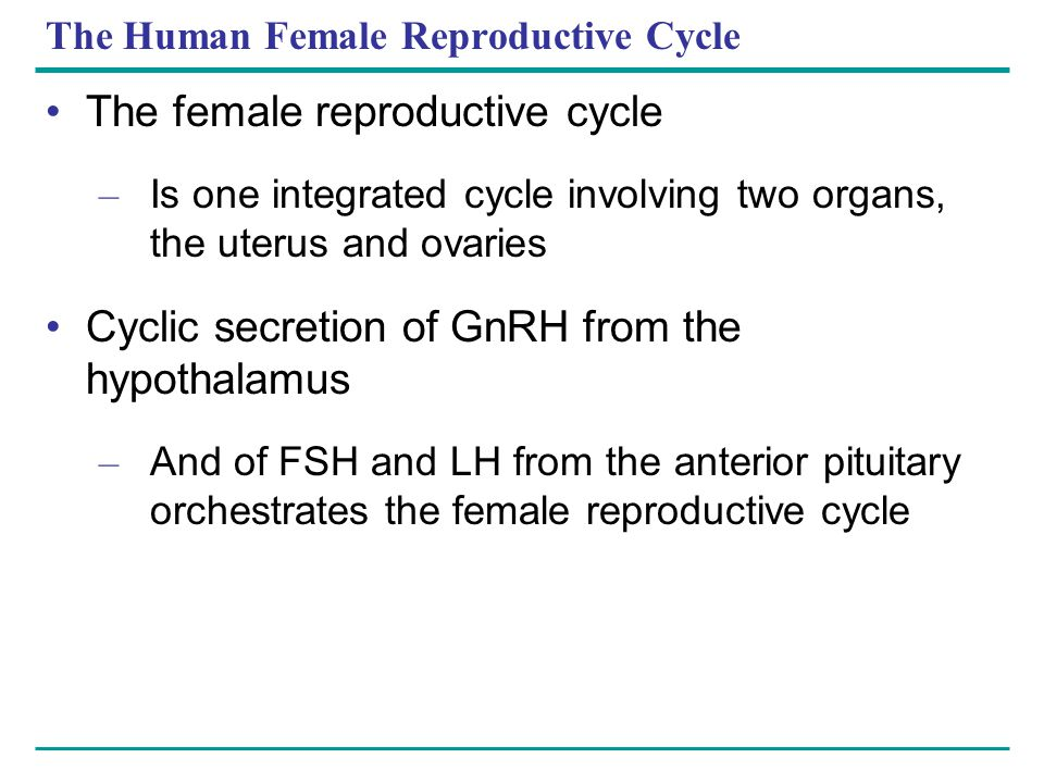 The Human Female Reproductive Cycle The female reproductive cycle – Is one integrated cycle involving two organs, the uterus and ovaries Cyclic secret