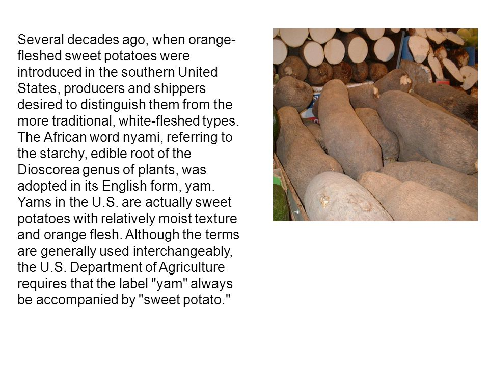 Several decades ago, when orange- fleshed sweet potatoes were introduced in the southern United States, producers and shippers desired to distinguish them from the more traditional, white-fleshed types.