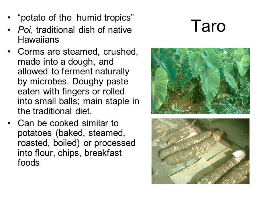 Taro potato of the humid tropics Poi, traditional dish of native Hawaiians Corms are steamed, crushed, made into a dough, and allowed to ferment naturally by microbes.