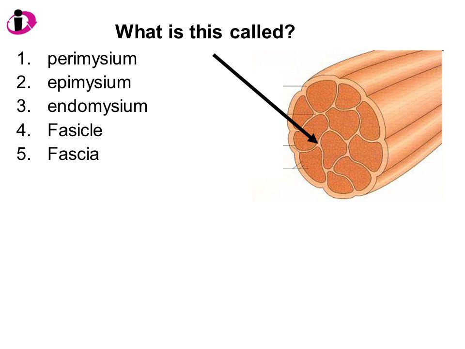 What is this called? 1.perimysium 2.epimysium 3.endomysium 4.Fasicle 5.Fascia
