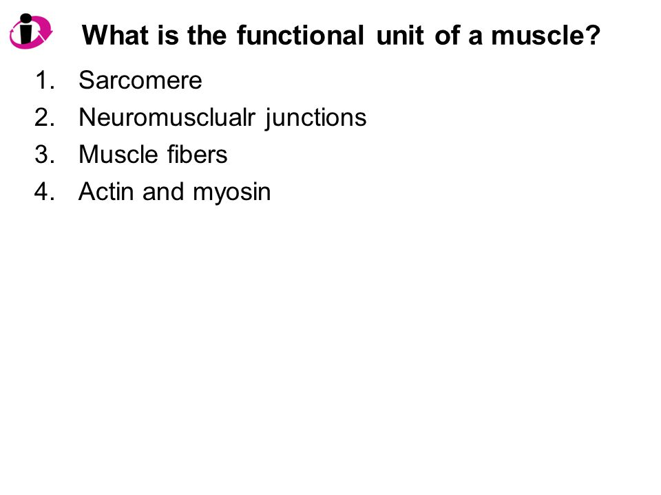 What is the functional unit of a muscle? 1.Sarcomere 2.Neuromusclualr junctions 3.Muscle fibers 4.Actin and myosin