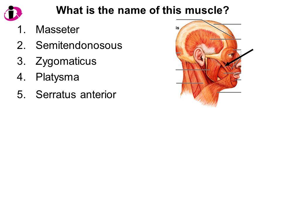 What is the name of this muscle? 1.Masseter 2.Semitendonosous 3.Zygomaticus 4.Platysma 5.Serratus anterior