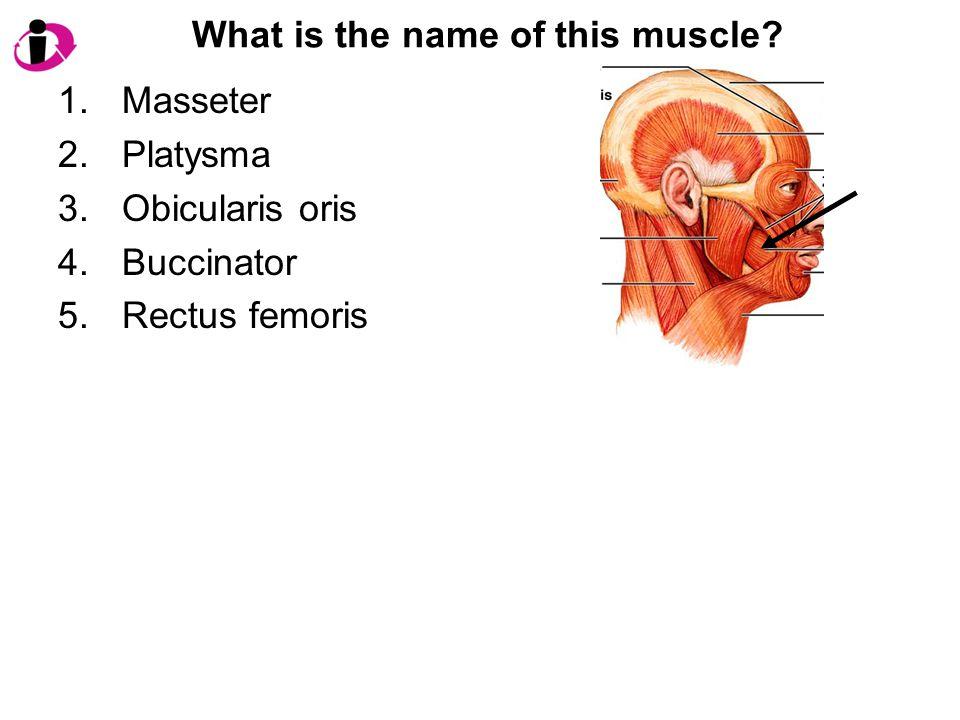 What is the name of this muscle? 1.Masseter 2.Platysma 3.Obicularis oris 4.Buccinator 5.Rectus femoris