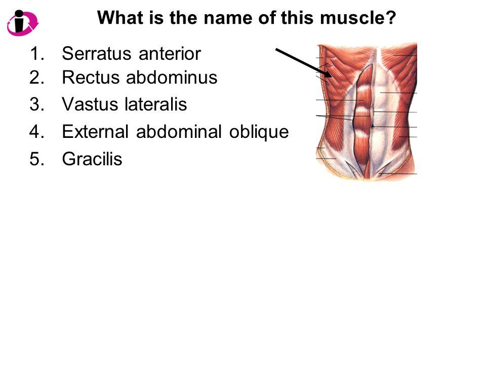 What is the name of this muscle? 1.Serratus anterior 2.Rectus abdominus 3.Vastus lateralis 4.External abdominal oblique 5.Gracilis