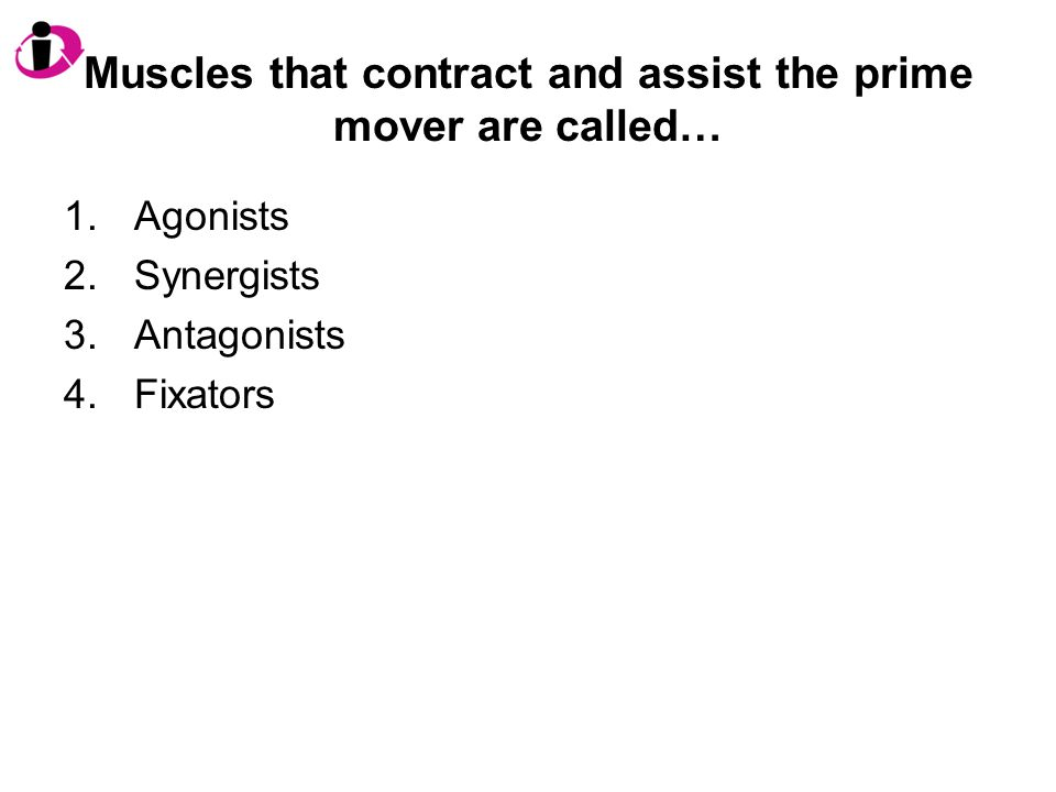 Muscles that contract and assist the prime mover are called… 1.Agonists 2.Synergists 3.Antagonists 4.Fixators