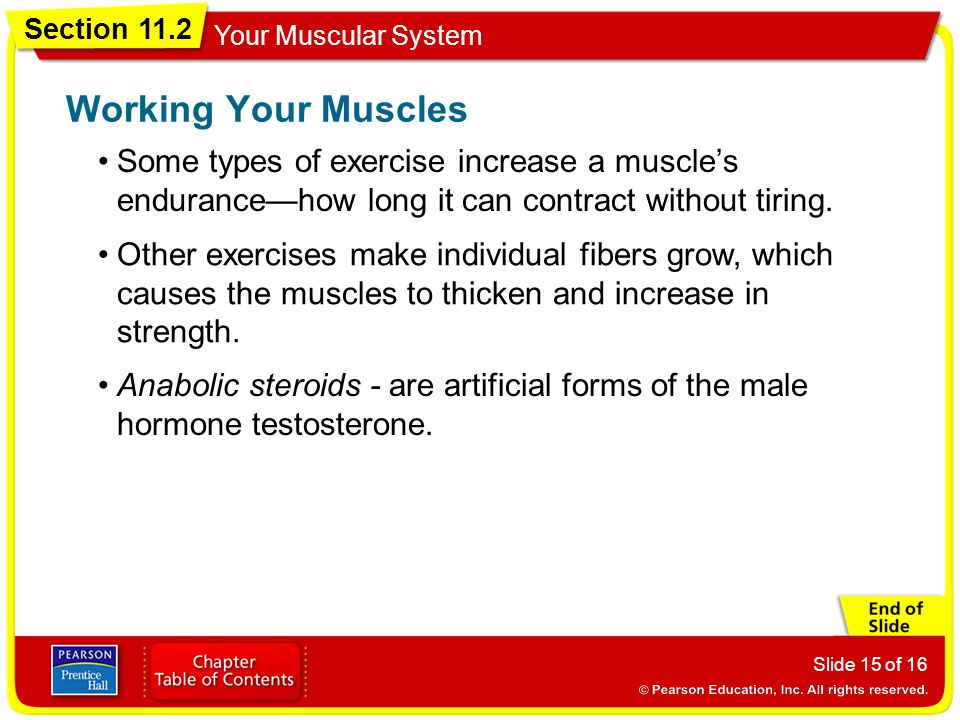 Section 11.2 Your Muscular System Slide 15 of 16 Some types of exercise increase a muscle's endurance—how long it can contract without tiring.