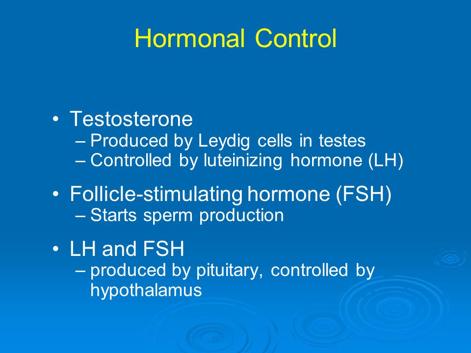 Hormonal Control Testosterone –Produced by Leydig cells in testes –Controlled by luteinizing hormone (LH) Follicle-stimulating hormone (FSH) –Starts s