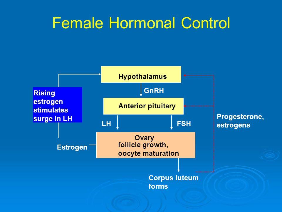 Female Hormonal Control Hypothalamus Anterior pituitary GnRH LHFSH Ovary Estrogen Progesterone, estrogens follicle growth, oocyte maturation Rising es