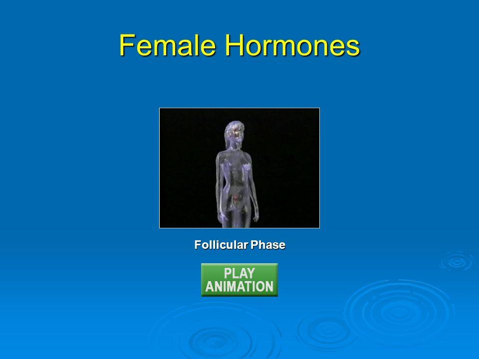 Follicular Phase Female Hormones