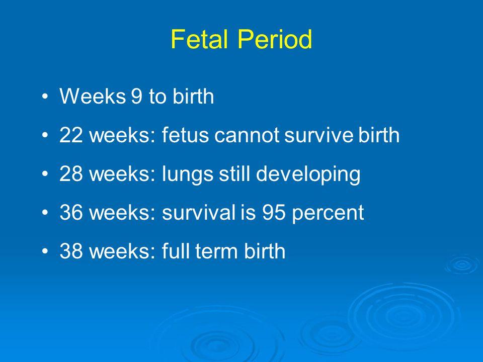 Fetal Period Weeks 9 to birth 22 weeks: fetus cannot survive birth 28 weeks: lungs still developing 36 weeks: survival is 95 percent 38 weeks: full te