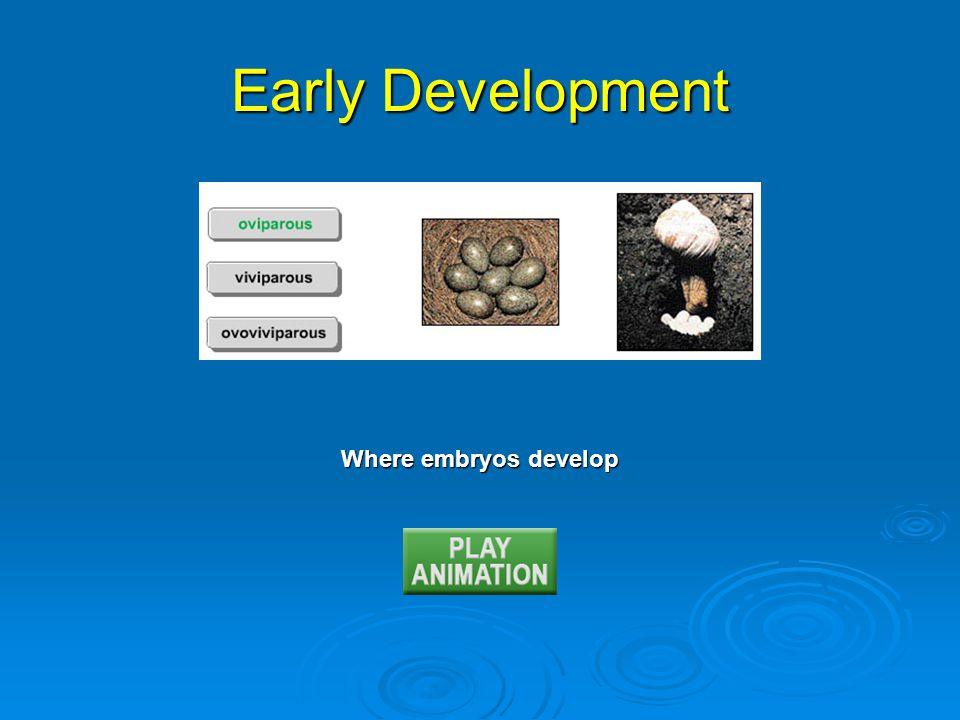 Stages of Human Development: Prenatal Zygote: single cell Morula: solid ball of cells Blastocyst: ball with fluid-filled cavity Embryo: 2 weeks to 8 weeks Fetus: 9 weeks to birth
