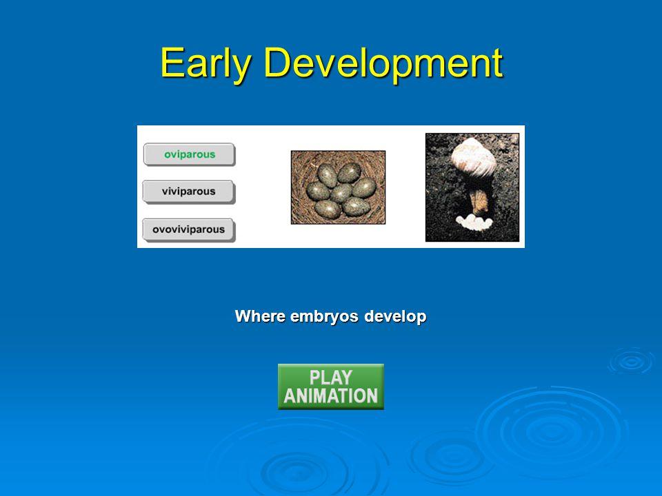Where embryos develop Early Development
