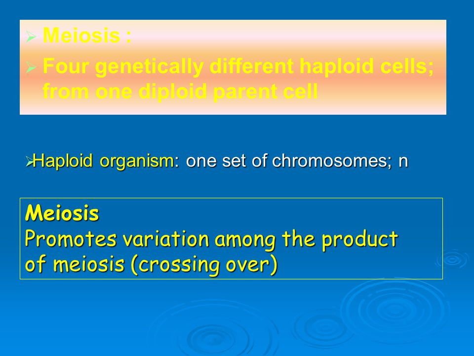   Meiosis :   Four genetically different haploid cells; from one diploid parent cell Meiosis Promotes variation among the product of meiosis (cros