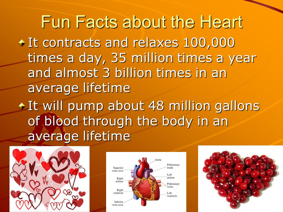 Fun Facts about the Heart It contracts and relaxes 100,000 times a day, 35 million times a year and almost 3 billion times in an average lifetime It w