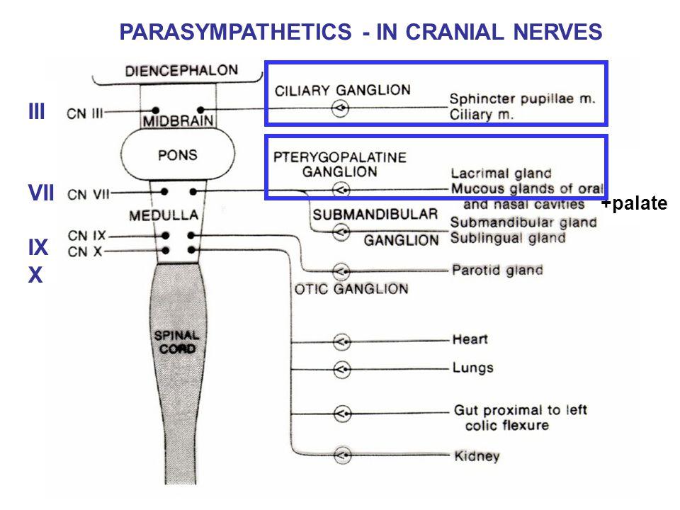 PARASYMPATHETICS - IN CRANIAL NERVES +palate III VII IX X