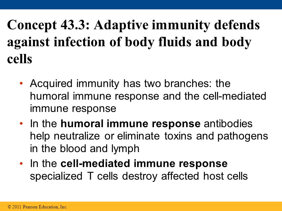 Concept 43.3: Adaptive immunity defends against infection of body fluids and body cells Acquired immunity has two branches: the humoral immune respons