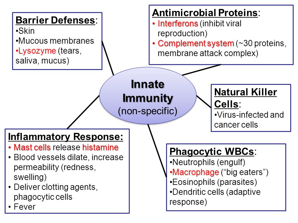 Barrier Defenses: Skin Mucous membranes LysozymeLysozyme (tears, saliva, mucus) Inflammatory Response: Mast cells histamineMast cells release histamin