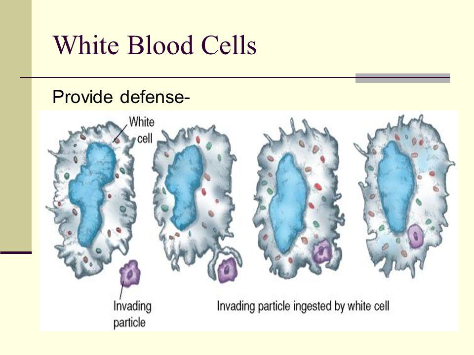 White Blood Cells Provide defense-