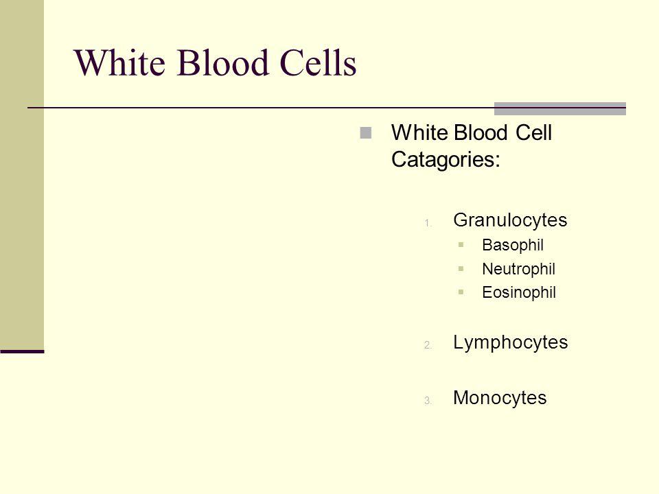 White Blood Cells White Blood Cell Catagories: 1. Granulocytes  Basophil  Neutrophil  Eosinophil 2. Lymphocytes 3. Monocytes