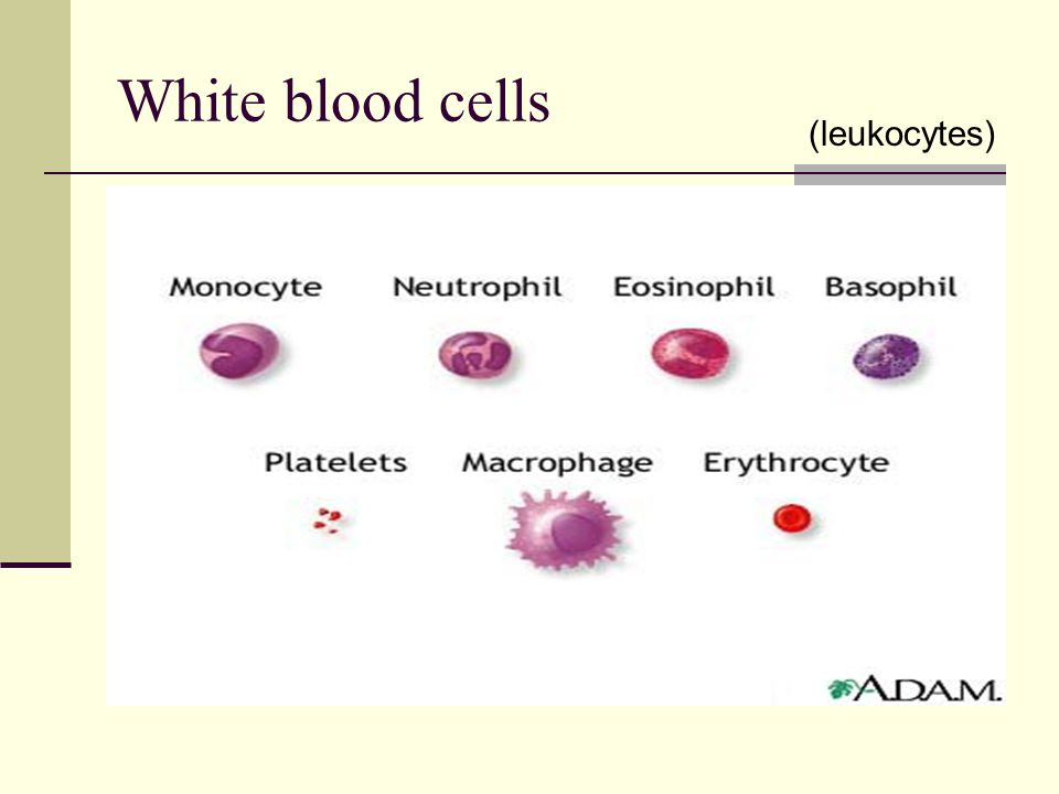Diseases of the Red Blood Cells Sickle Cell Disease Sickle cell crises