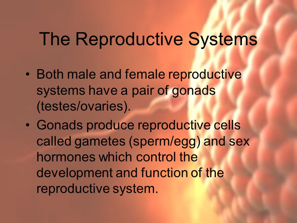 Homeostasis 5: Hormone Regulation of the Reproductive System