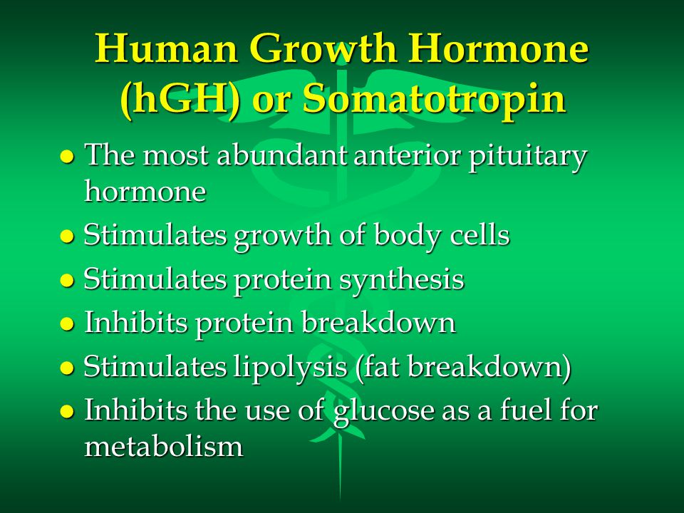 Thyroid Stimulating Hormone (TSH) l Also called Thyrotropin l Influences the body's metabolic rate l Stimulates the secretion of: –T3 - Triiodothyronine –T4 - Thyroxine