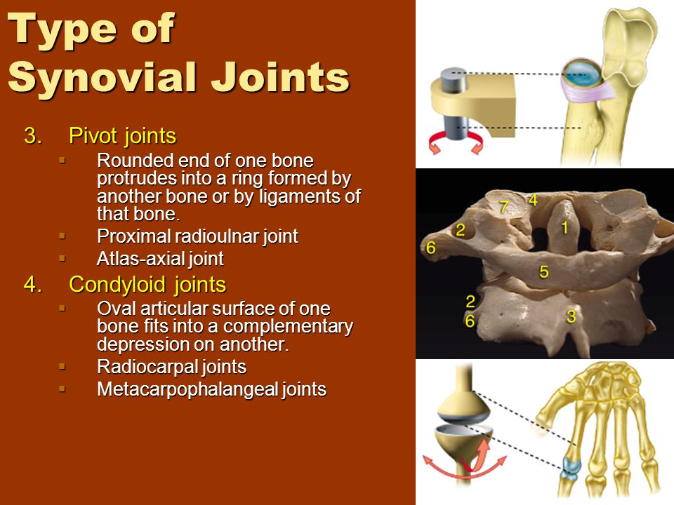 Type of Synovial Joints 3.Pivot joints  Rounded end of one bone protrudes into a ring formed by another bone or by ligaments of that bone.