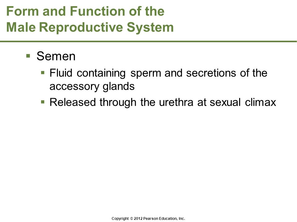 Copyright © 2012 Pearson Education, Inc. Form and Function of the Male Reproductive System  Semen  Fluid containing sperm and secretions of the acce