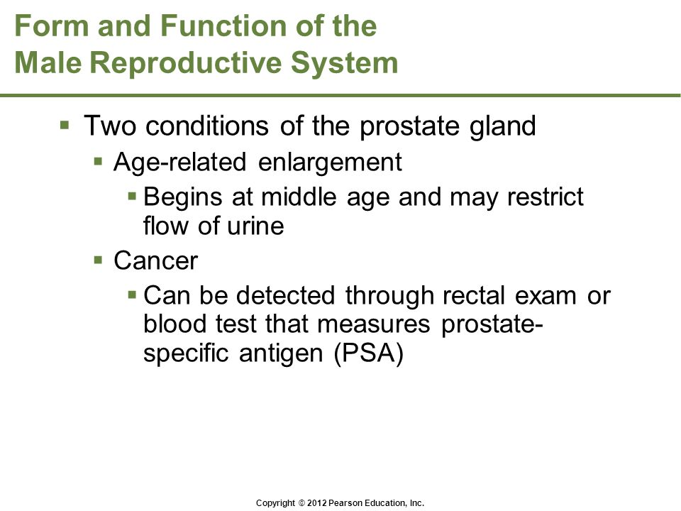 Copyright © 2012 Pearson Education, Inc. Form and Function of the Male Reproductive System  Two conditions of the prostate gland  Age-related enlarg