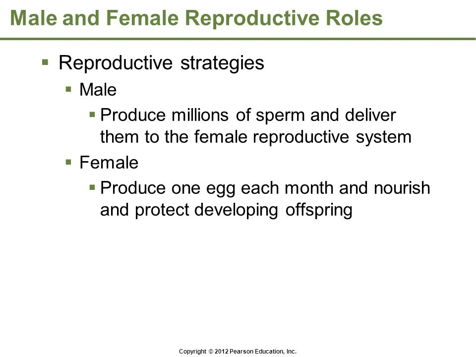Copyright © 2012 Pearson Education, Inc. Male and Female Reproductive Roles  Reproductive strategies  Male  Produce millions of sperm and deliver t