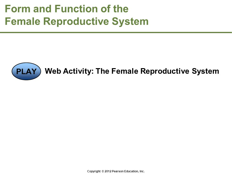 Form and Function of the Female Reproductive System Web Activity: The Female Reproductive System