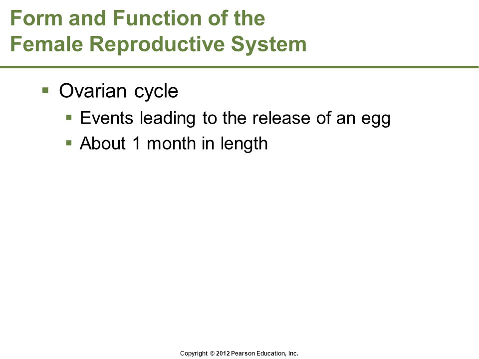 Copyright © 2012 Pearson Education, Inc. Form and Function of the Female Reproductive System  Ovarian cycle  Events leading to the release of an egg