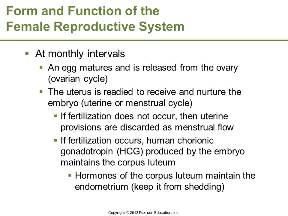 Form and Function of the Female Reproductive System  At monthly intervals  An egg matures and is released from the ovary (ovarian cycle)  The uteru
